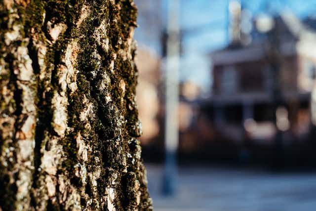 Close view of tree bark in a residential neighborhood