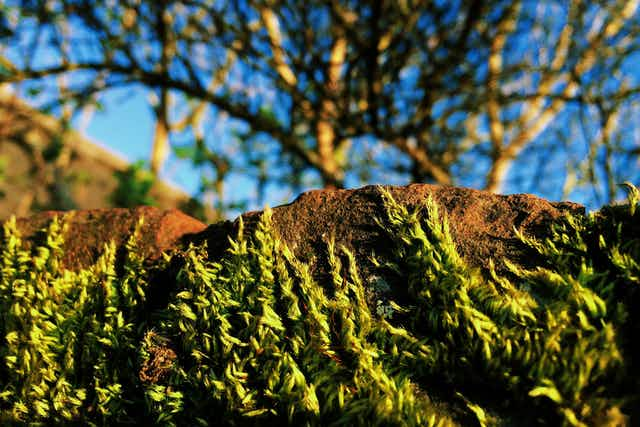 Wisps of moss on a brick, highlighted by sun, with trees and sky far in the background