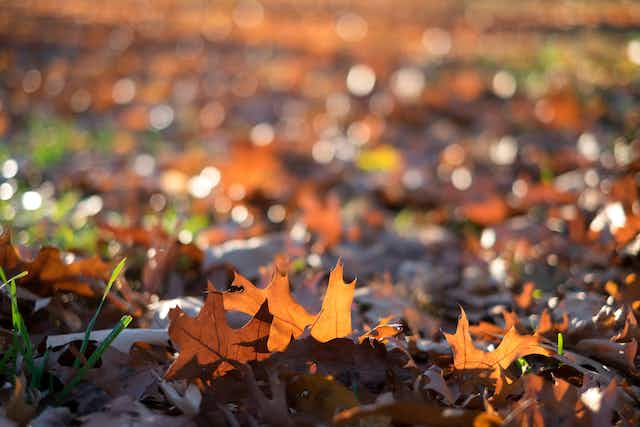 Brown and orange fallen leaves on the grassy ground in Central Park